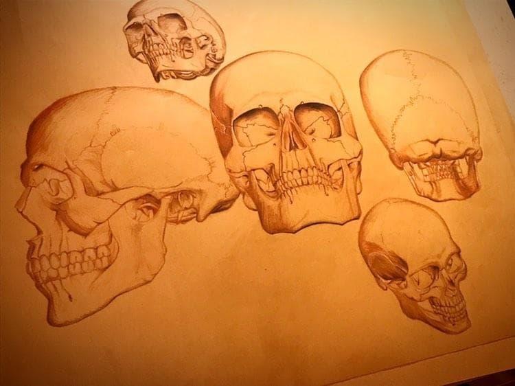 Cours d'anatomie artistique